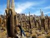 Een cactus groeit een centimeter per jaar. Reken maar uit.