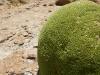 Groene stenen in het zuiden van Bolivia.