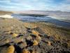 De stipjes zijn flamingo´s in een van de Lagunas Colorados.
