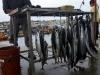 Vis is niet weg te denken uit het kustland Chili