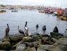 In de haven van Caldera wachten pelikanen en zeeleeuwen op vissers die ingewanden van schoongemaakte vissen in het water gooien