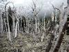Naast adembenemende gletsjer zijn er nog meer dramatische settings zoals dit bos in de Franse vallei
