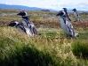 De penguïns gaan s´ochtends massaal op weg naar het water om op voedsel te jagen en ´s avonds gaan ze volgevreten weer terug naar hun hol