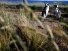 Een penguinmannetje en vrouwtje blijven hun leven lang samen.
