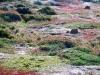 Een penguïnkoppel in het zuiden van Chili kijkt uit over de vlakte